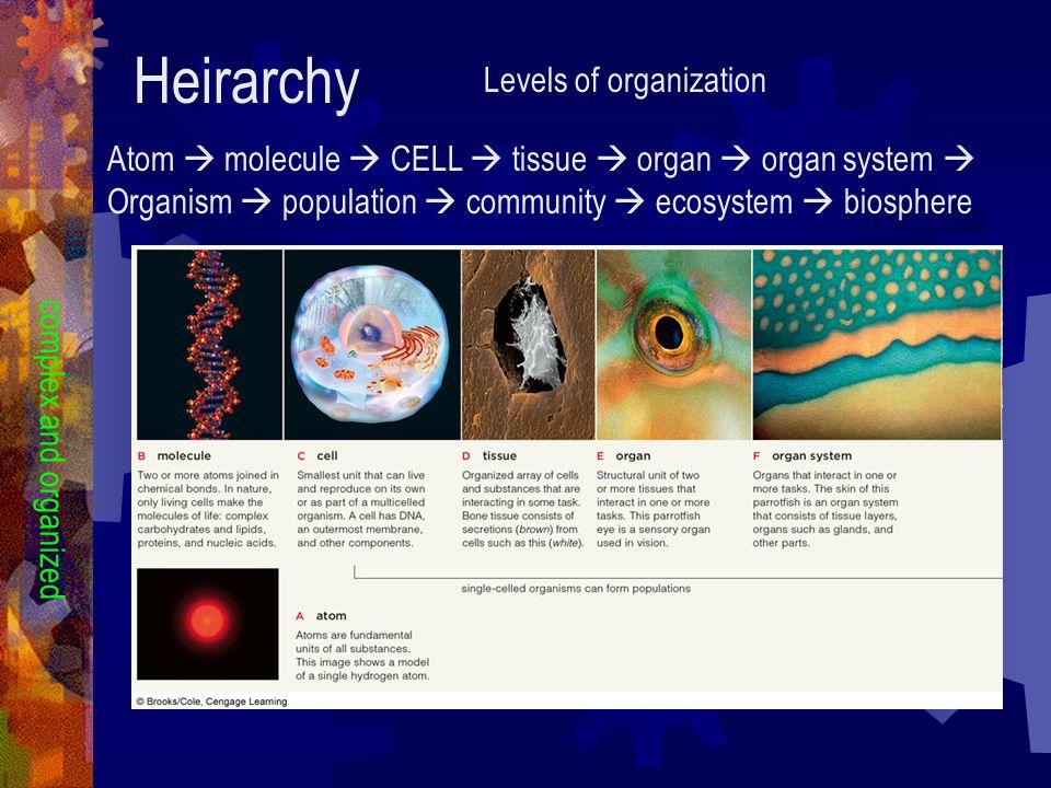 Heirarchy Levels of organization Atom molecule CELL tissue organ organ system Organism population community ecosystem biosphere complex and organized