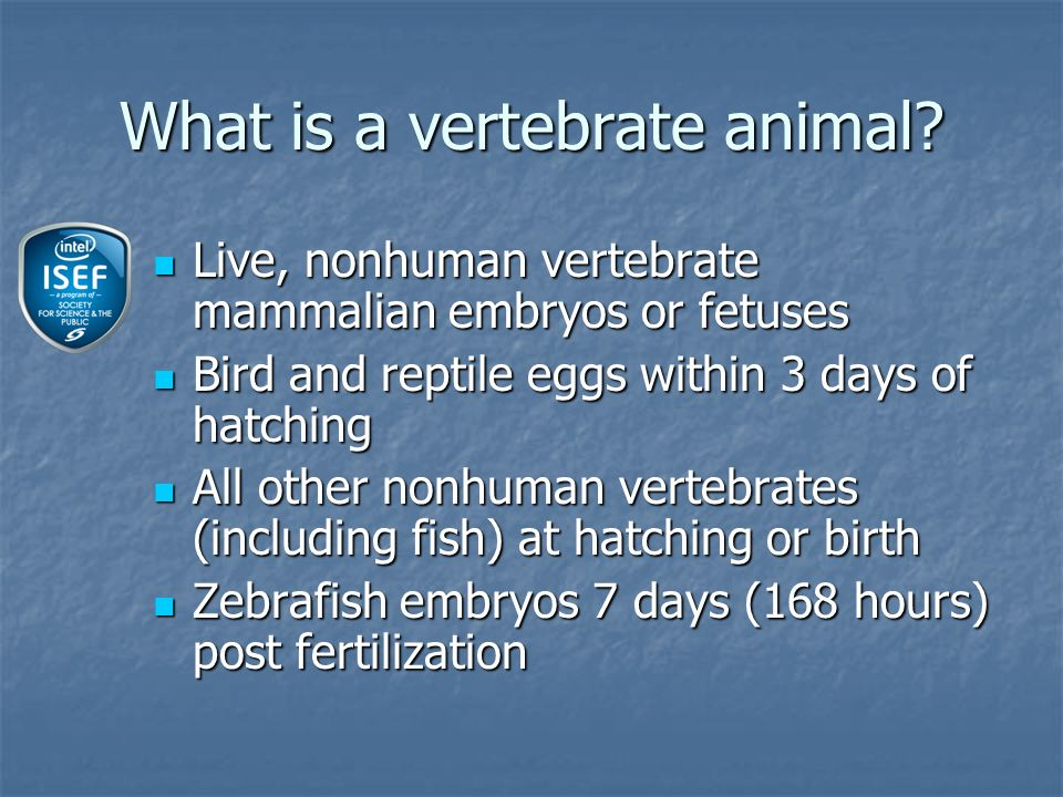What is a vertebrate animal.