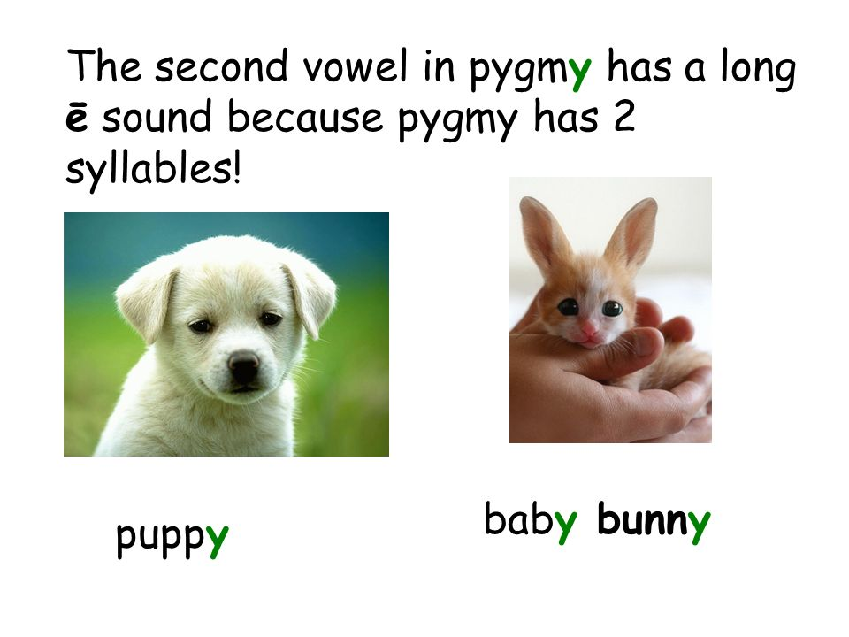 The second vowel in pygmy has a long ē sound because pygmy has 2 syllables! puppy baby bunny