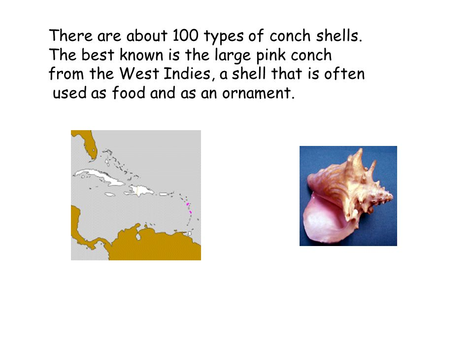Florida Fighting Conch These animals lick the surface of the sand and sea grass with a structure called a rasping tongue or radula .