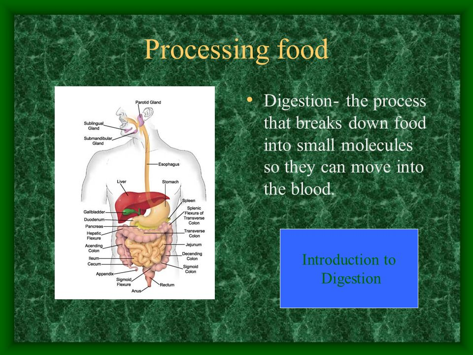 Processing food Digestion- the process that breaks down food into small molecules so they can move into the blood. Introduction to Digestion