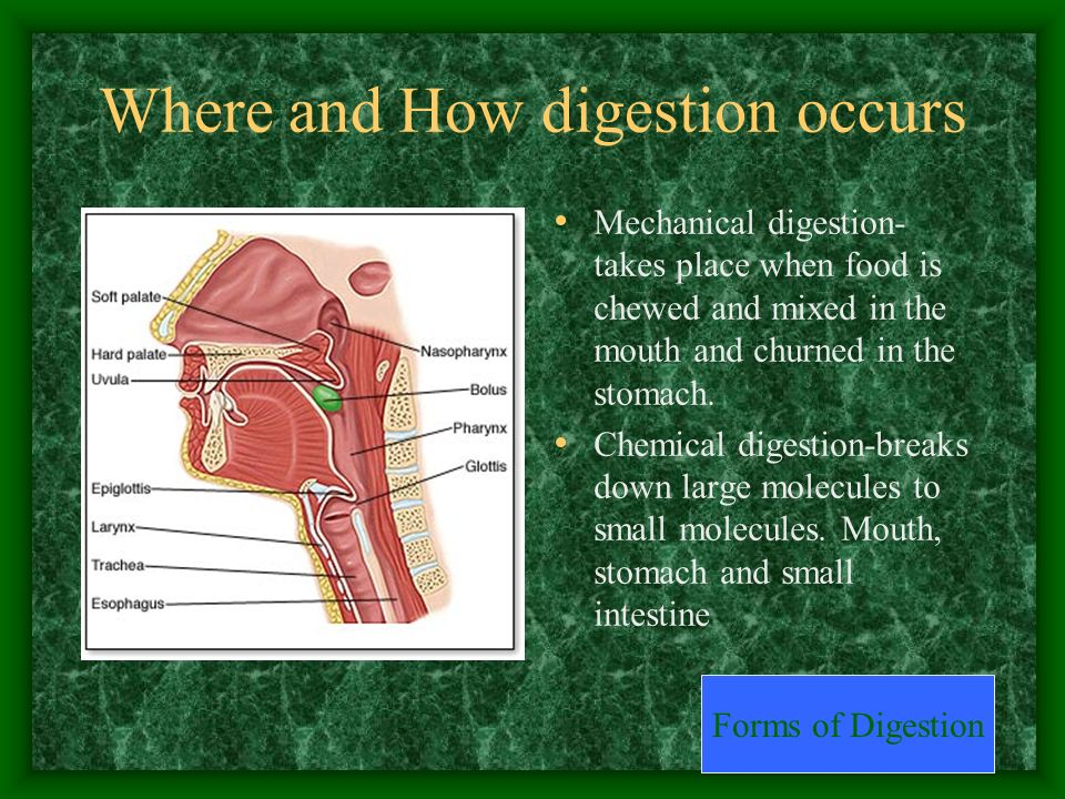 Where and How digestion occurs Mechanical digestion- takes place when food is chewed and mixed in the mouth and churned in the stomach. Chemical diges