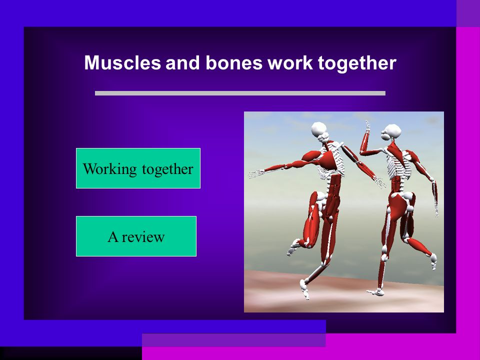 Muscles and bones work together Working together A review
