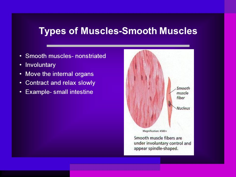 Types of Muscles-Smooth Muscles Smooth muscles- nonstriated Involuntary Move the internal organs Contract and relax slowly Example- small intestine