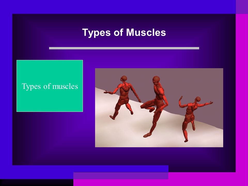 Types of Muscles Types of muscles