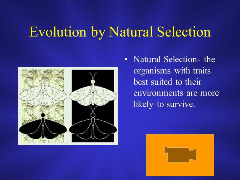 Evolution by Natural Selection Natural Selection- the organisms with traits best suited to their environments are more likely to survive.