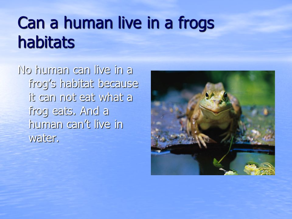 Can a human live in a frogs habitats No human can live in a frogs habitat because it can not eat what a frog eats.