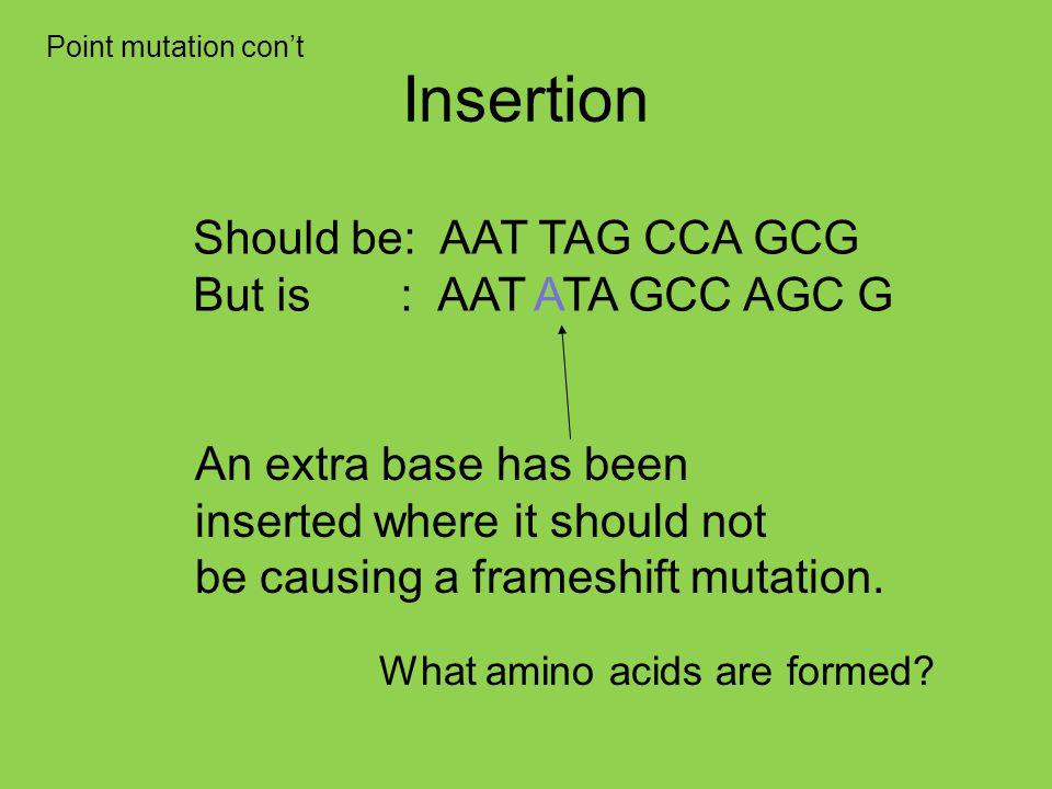 Insertion Should be: AAT TAG CCA GCG But is : AAT ATA GCC AGC G An extra base has been inserted where it should not be causing a frameshift mutation.