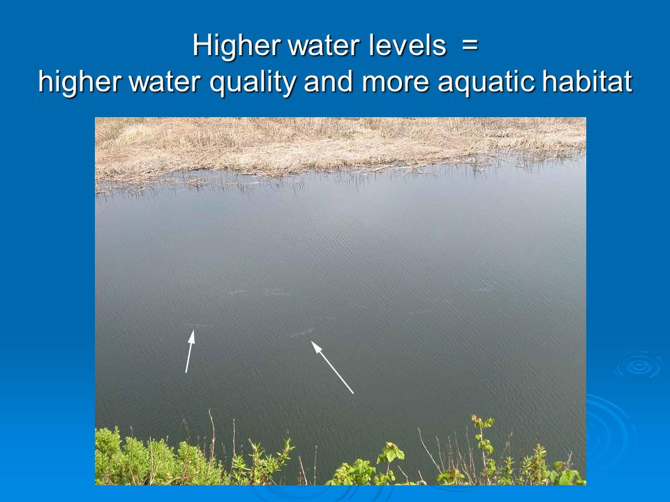 Higher water levels = higher water quality and more aquatic habitat