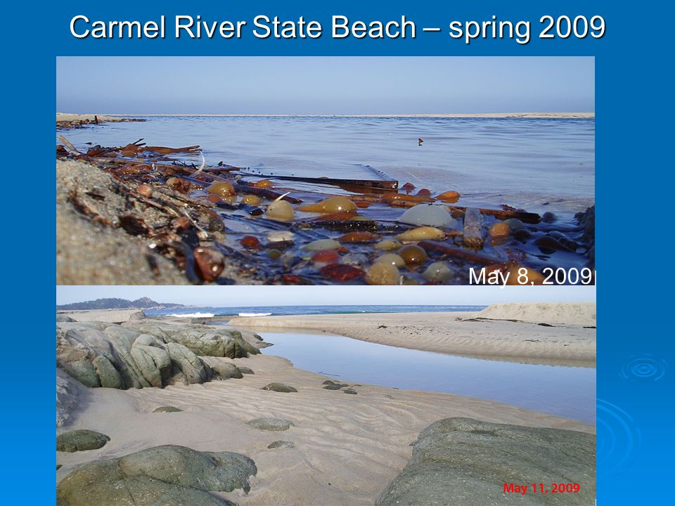 Carmel River State Beach – spring 2009 May 8, 2009