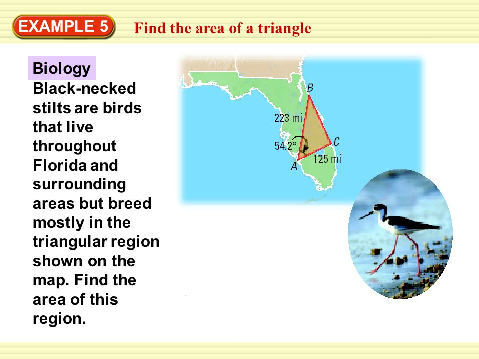 EXAMPLE 5 Find the area of a triangle Biology Black-necked stilts are birds that live throughout Florida and surrounding areas but breed mostly in the