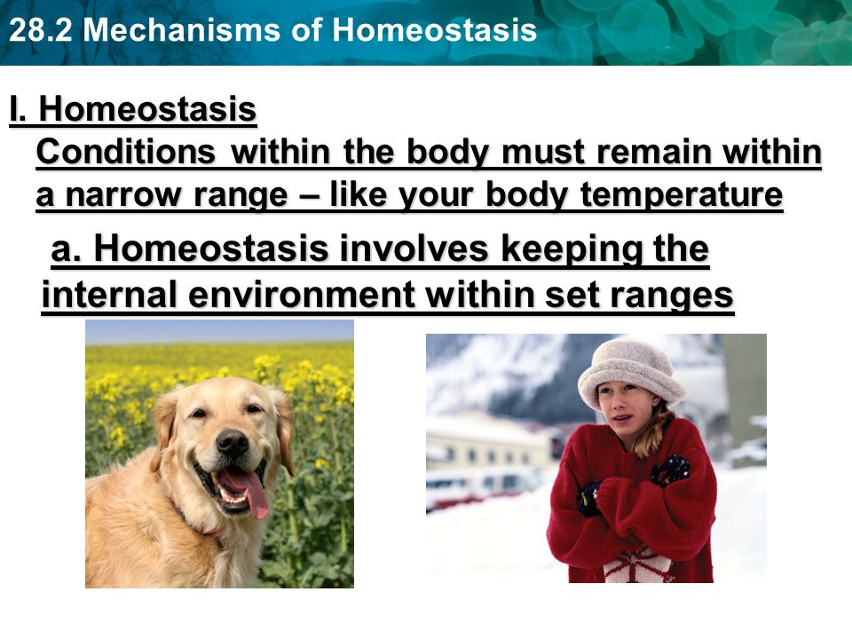 28.2 Mechanisms of Homeostasis I. Homeostasis Conditions within the body must remain within a narrow range – like your body temperature a. Homeostasis