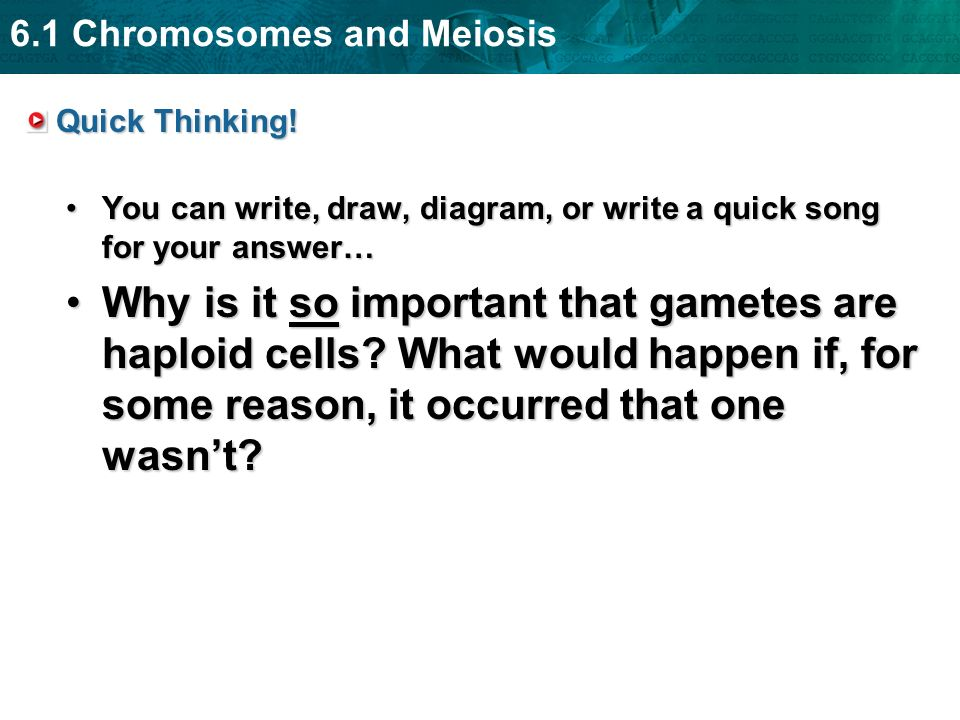 6.1 Chromosomes and Meiosis Quick Thinking! You can write, draw, diagram, or write a quick song for your answer…You can write, draw, diagram, or write