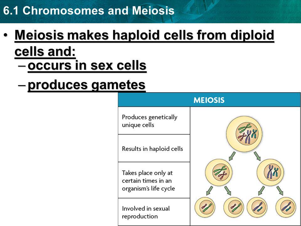 6.1 Chromosomes and Meiosis Meiosis makes haploid cells from diploid cells and:Meiosis makes haploid cells from diploid cells and: –occurs in sex cell