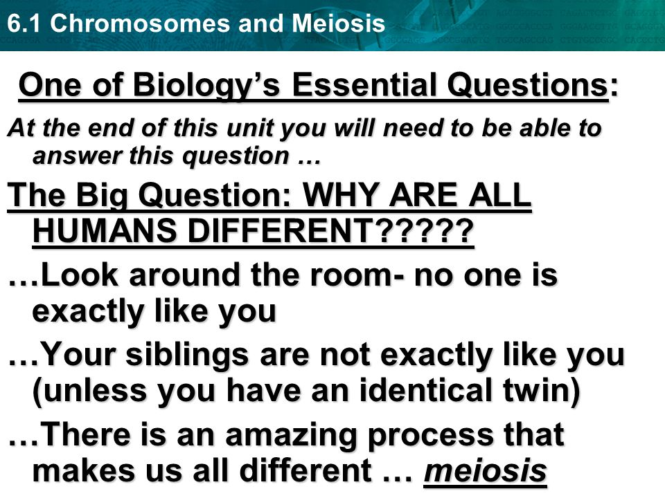 6.1 Chromosomes and Meiosis One of Biologys Essential Questions: At the end of this unit you will need to be able to answer this question … The Big Qu