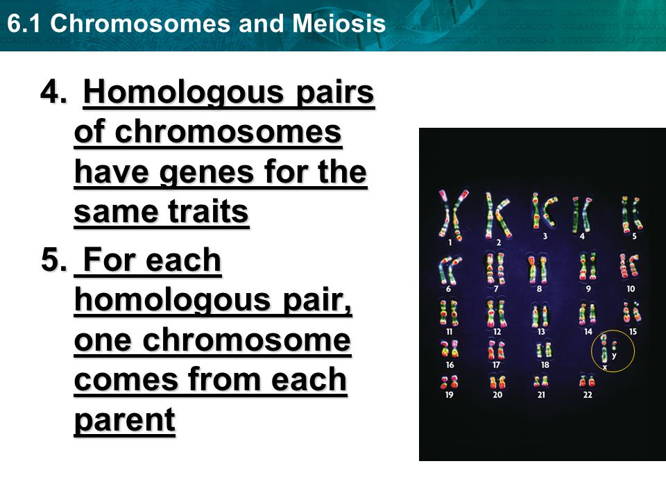 6.1 Chromosomes and Meiosis Think-Pair-Share (2 min.) Do you believe that homologous chromosomes are identical to each other?Do you believe that homologous chromosomes are identical to each other.