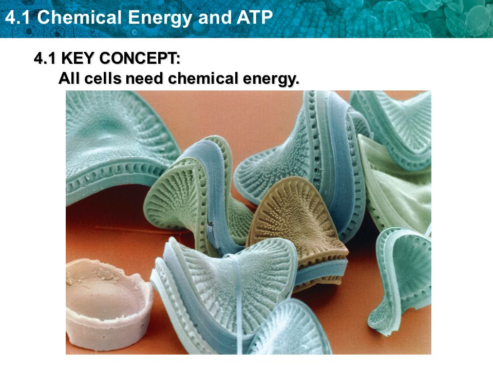 4.1 Chemical Energy and ATP 4.1 KEY CONCEPT: All cells need chemical energy.