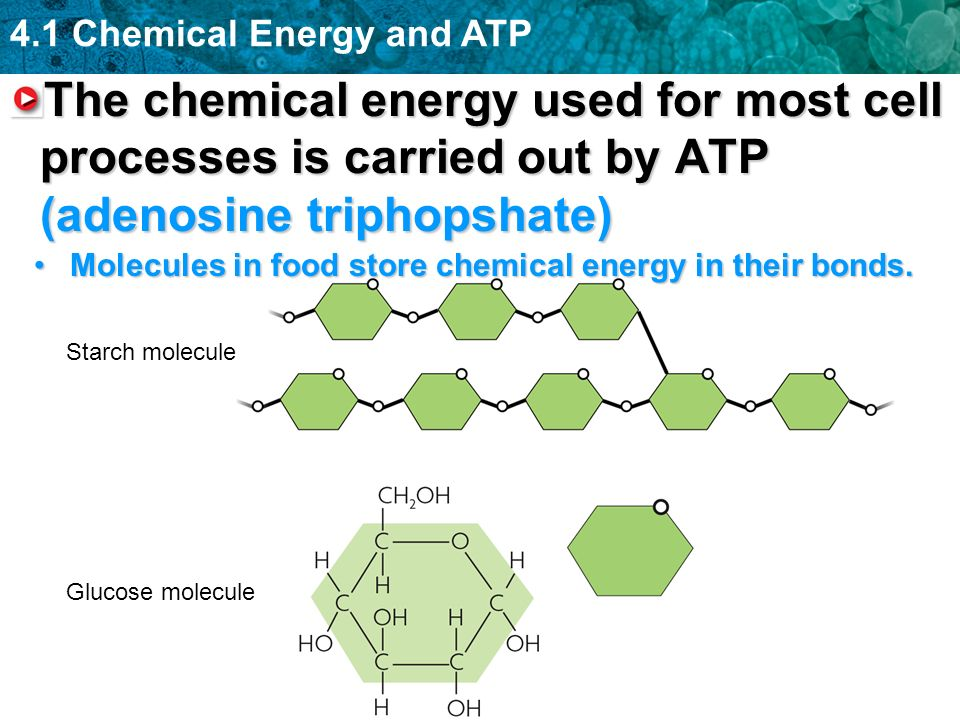 4.1 Chemical Energy and ATP The chemical energy used for most cell processes is carried out by ATP (adenosine triphopshate) Starch molecule Glucose molecule Molecules in food store chemical energy in their bonds.Molecules in food store chemical energy in their bonds.