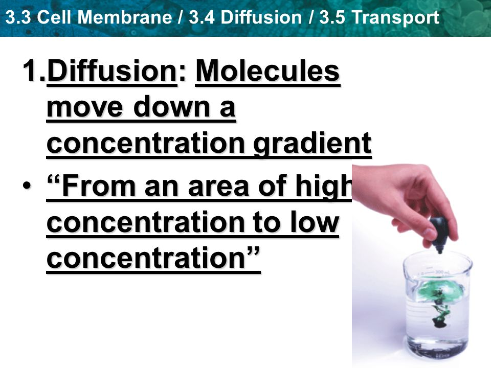 3.3 Cell Membrane / 3.4 Diffusion / 3.5 Transport 1.Diffusion: Molecules move down a concentration gradient From an area of high concentration to low