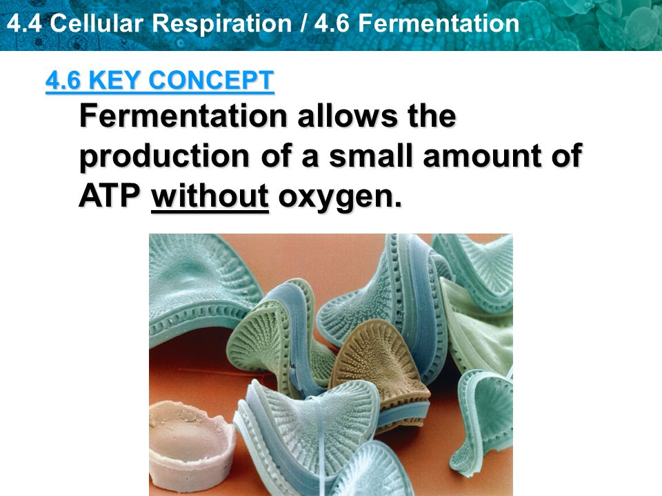 4.4 Cellular Respiration / 4.6 Fermentation 4.6 KEY CONCEPT Fermentation allows the production of a small amount of ATP without oxygen.