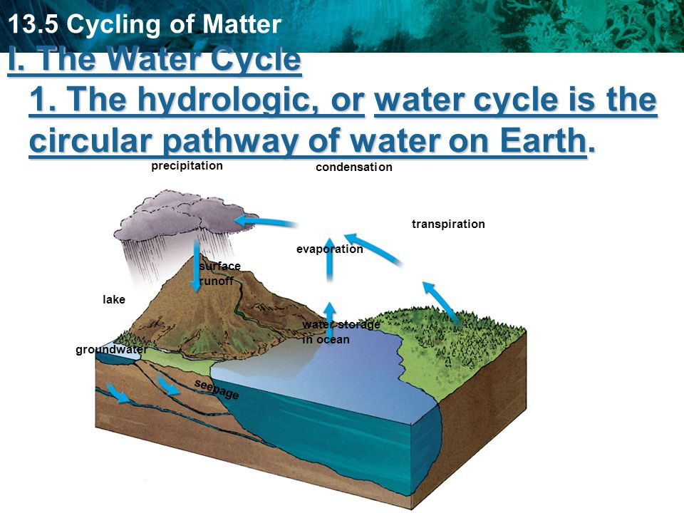 13.5 Cycling of Matter I. The Water Cycle 1. The hydrologic, or water cycle is the circular pathway of water on Earth. precipitation condensation tran