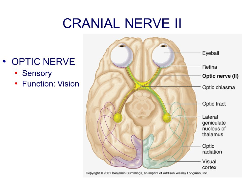 CRANIAL NERVE II OPTIC NERVE Sensory Function: Vision