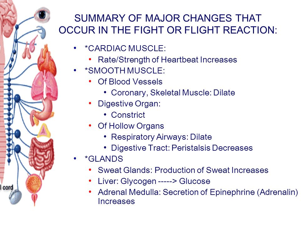 SUMMARY OF MAJOR CHANGES THAT OCCUR IN THE FIGHT OR FLIGHT REACTION: *CARDIAC MUSCLE: Rate/Strength of Heartbeat Increases *SMOOTH MUSCLE: Of Blood Vessels Coronary, Skeletal Muscle: Dilate Digestive Organ: Constrict Of Hollow Organs Respiratory Airways: Dilate Digestive Tract: Peristalsis Decreases *GLANDS Sweat Glands: Production of Sweat Increases Liver: Glycogen -----> Glucose Adrenal Medulla: Secretion of Epinephrine (Adrenalin) Increases