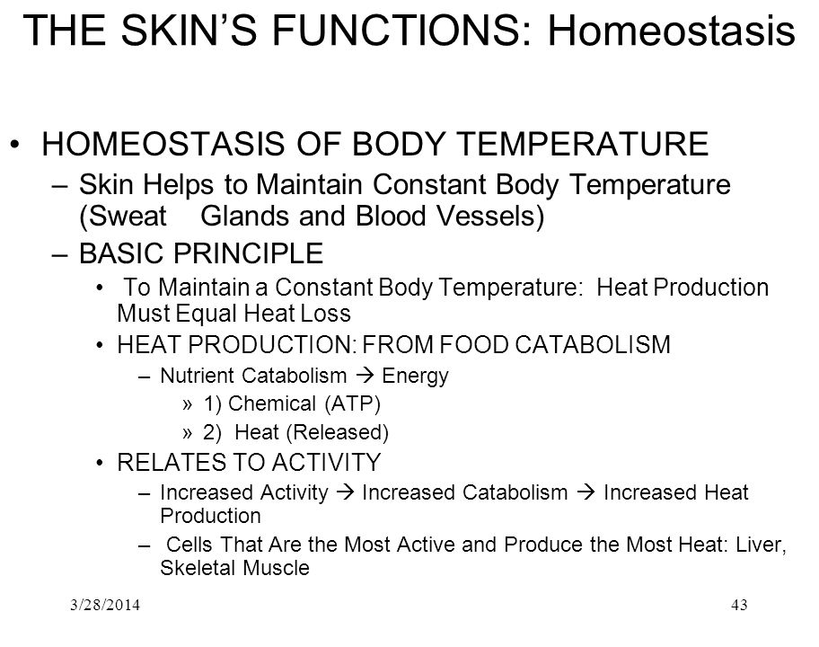 3/28/201443 THE SKINS FUNCTIONS: Homeostasis HOMEOSTASIS OF BODY TEMPERATURE –Skin Helps to Maintain Constant Body Temperature (Sweat Glands and Blood