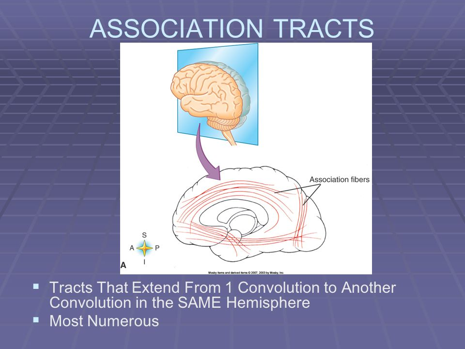 ASSOCIATION TRACTS Tracts That Extend From 1 Convolution to Another Convolution in the SAME Hemisphere Most Numerous