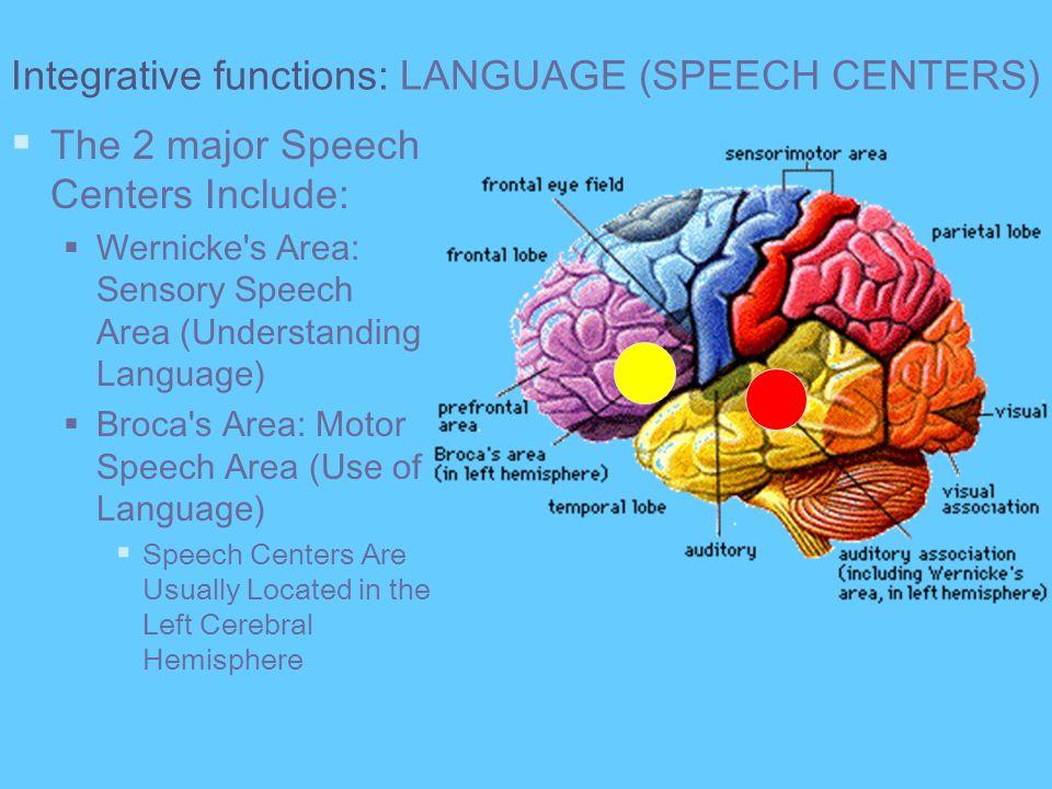 Integrative functions: LANGUAGE (SPEECH CENTERS) The 2 major Speech Centers Include: Wernicke's Area: Sensory Speech Area (Understanding Language) Bro