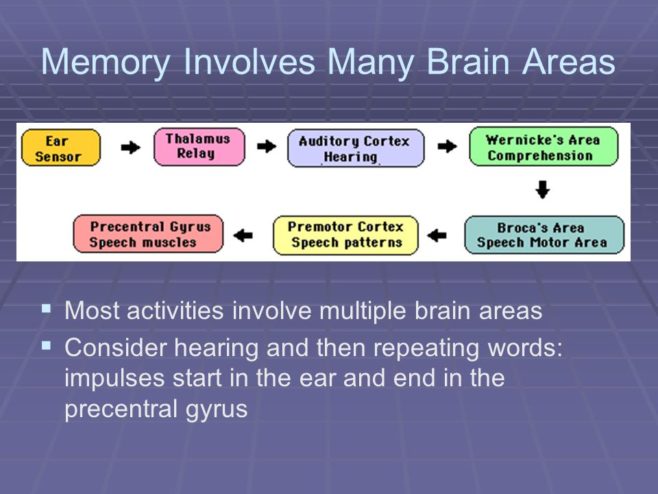 Memory Involves Many Brain Areas Most activities involve multiple brain areas Consider hearing and then repeating words: impulses start in the ear and