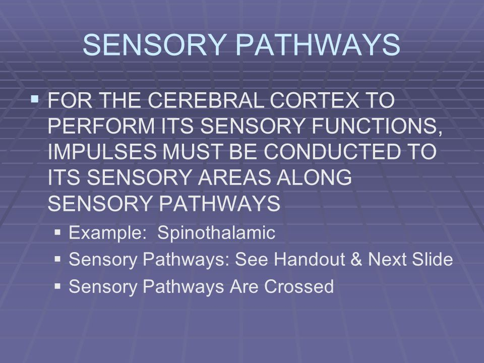 SENSORY PATHWAYS FOR THE CEREBRAL CORTEX TO PERFORM ITS SENSORY FUNCTIONS, IMPULSES MUST BE CONDUCTED TO ITS SENSORY AREAS ALONG SENSORY PATHWAYS Exam