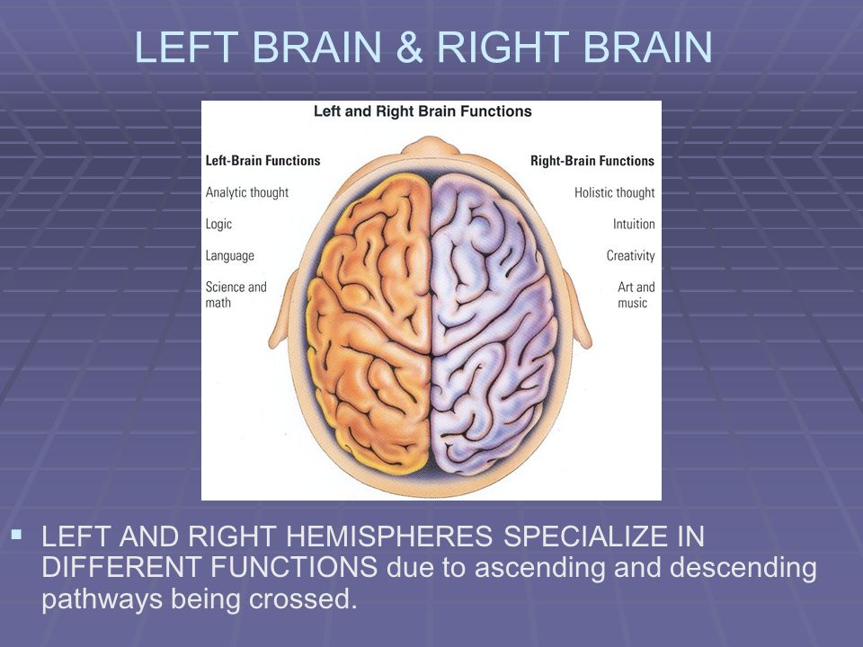 LEFT BRAIN & RIGHT BRAIN LEFT AND RIGHT HEMISPHERES SPECIALIZE IN DIFFERENT FUNCTIONS due to ascending and descending pathways being crossed.