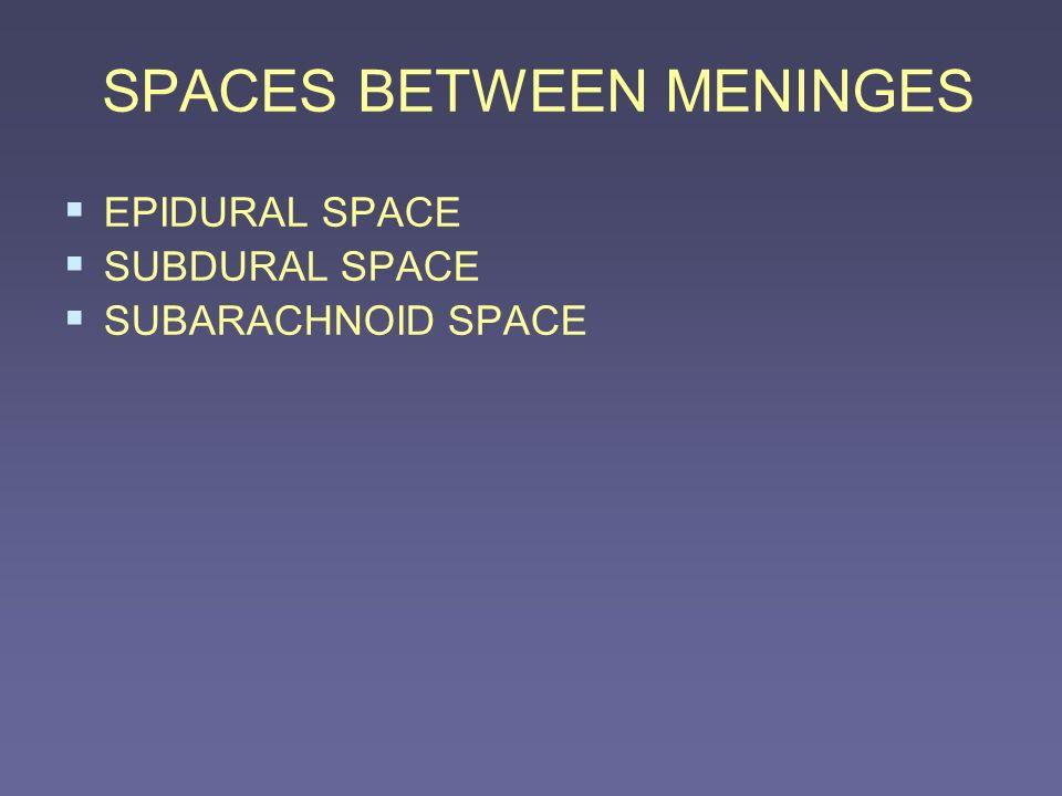 SPACES BETWEEN MENINGES EPIDURAL SPACE SUBDURAL SPACE SUBARACHNOID SPACE