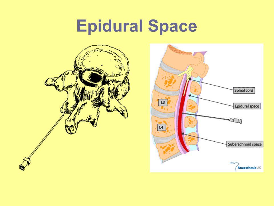 Epidural Space