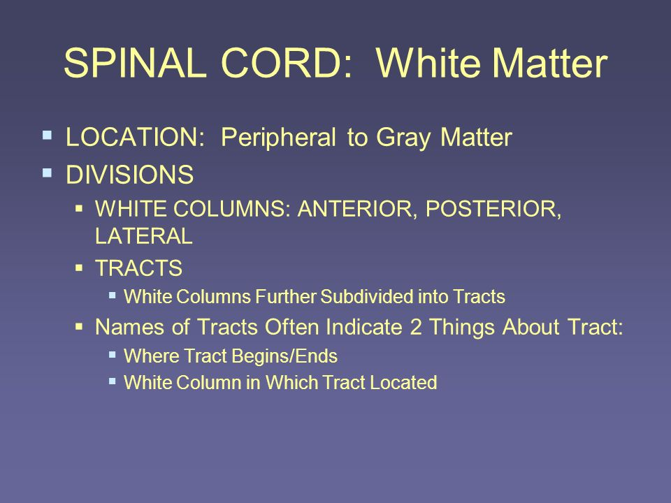 SPINAL CORD: White Matter LOCATION: Peripheral to Gray Matter DIVISIONS WHITE COLUMNS: ANTERIOR, POSTERIOR, LATERAL TRACTS White Columns Further Subdi