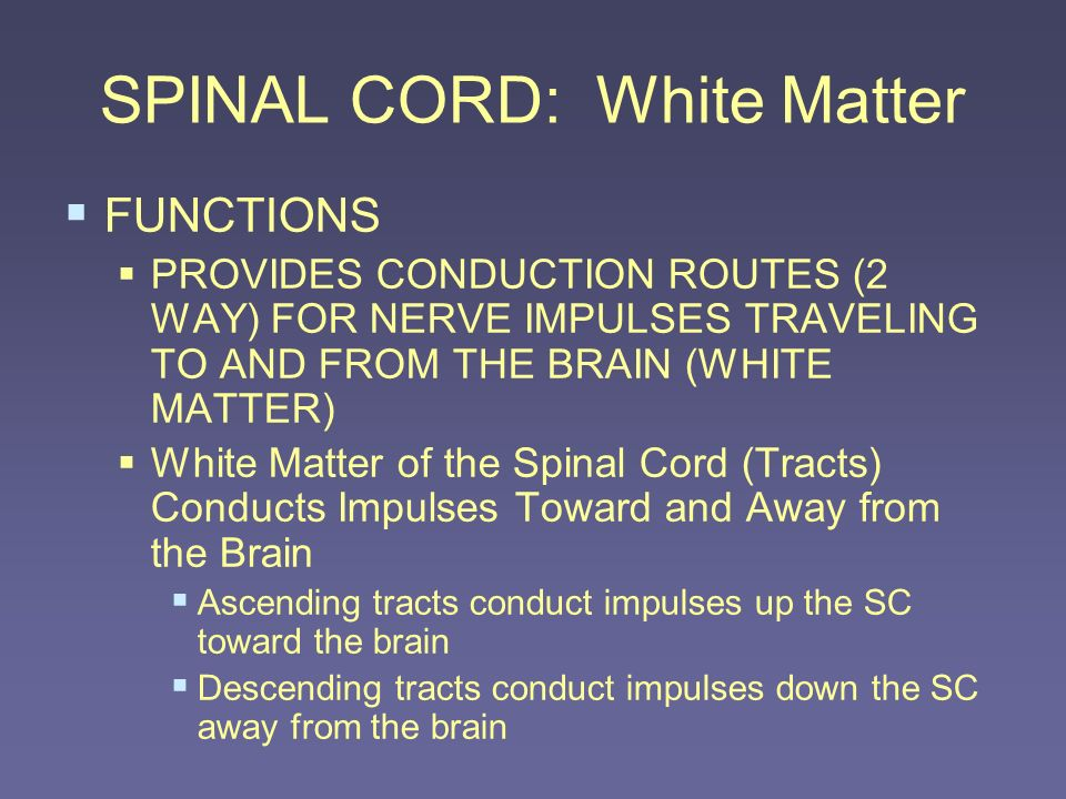 SPINAL CORD: White Matter FUNCTIONS PROVIDES CONDUCTION ROUTES (2 WAY) FOR NERVE IMPULSES TRAVELING TO AND FROM THE BRAIN (WHITE MATTER) White Matter