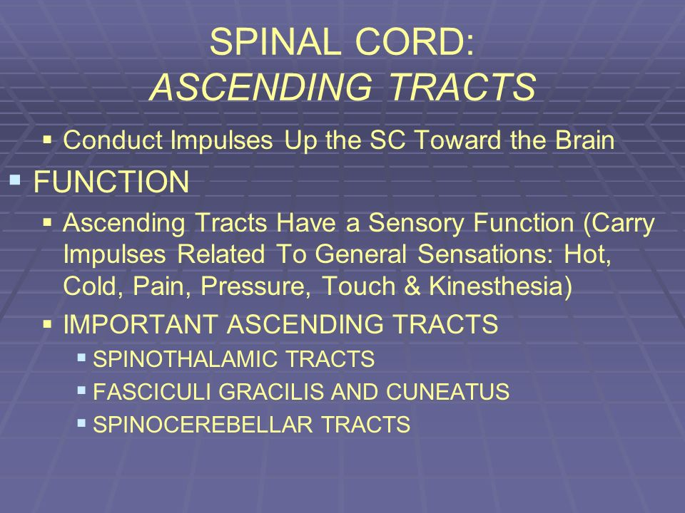 SPINAL CORD: ASCENDING TRACTS Conduct Impulses Up the SC Toward the Brain FUNCTION Ascending Tracts Have a Sensory Function (Carry Impulses Related To