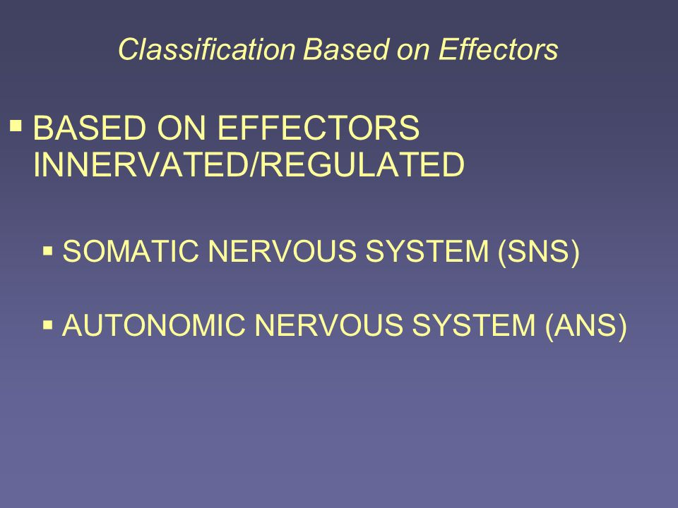 Classification Based on Effectors BASED ON EFFECTORS INNERVATED/REGULATED SOMATIC NERVOUS SYSTEM (SNS) AUTONOMIC NERVOUS SYSTEM (ANS)