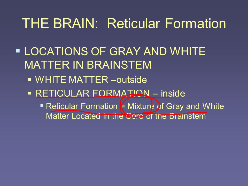 THE BRAIN: Reticular Formation LOCATIONS OF GRAY AND WHITE MATTER IN BRAINSTEM WHITE MATTER –outside RETICULAR FORMATION – inside Reticular Formation