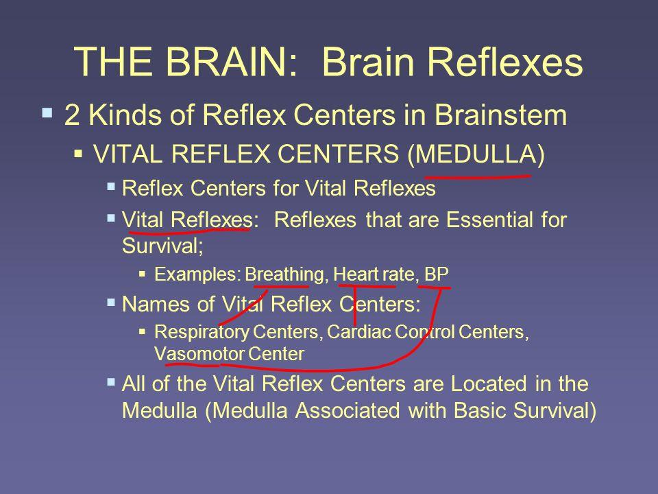 THE BRAIN: Brain Reflexes 2 Kinds of Reflex Centers in Brainstem VITAL REFLEX CENTERS (MEDULLA) Reflex Centers for Vital Reflexes Vital Reflexes: Refl