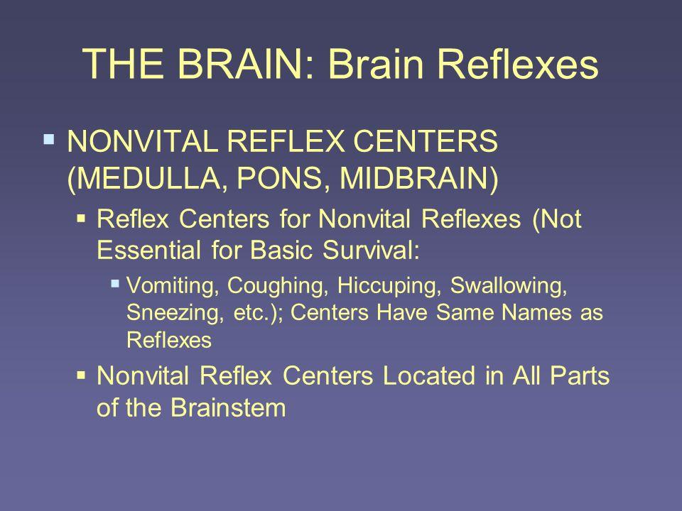 THE BRAIN: Brain Reflexes NONVITAL REFLEX CENTERS (MEDULLA, PONS, MIDBRAIN) Reflex Centers for Nonvital Reflexes (Not Essential for Basic Survival: Vo