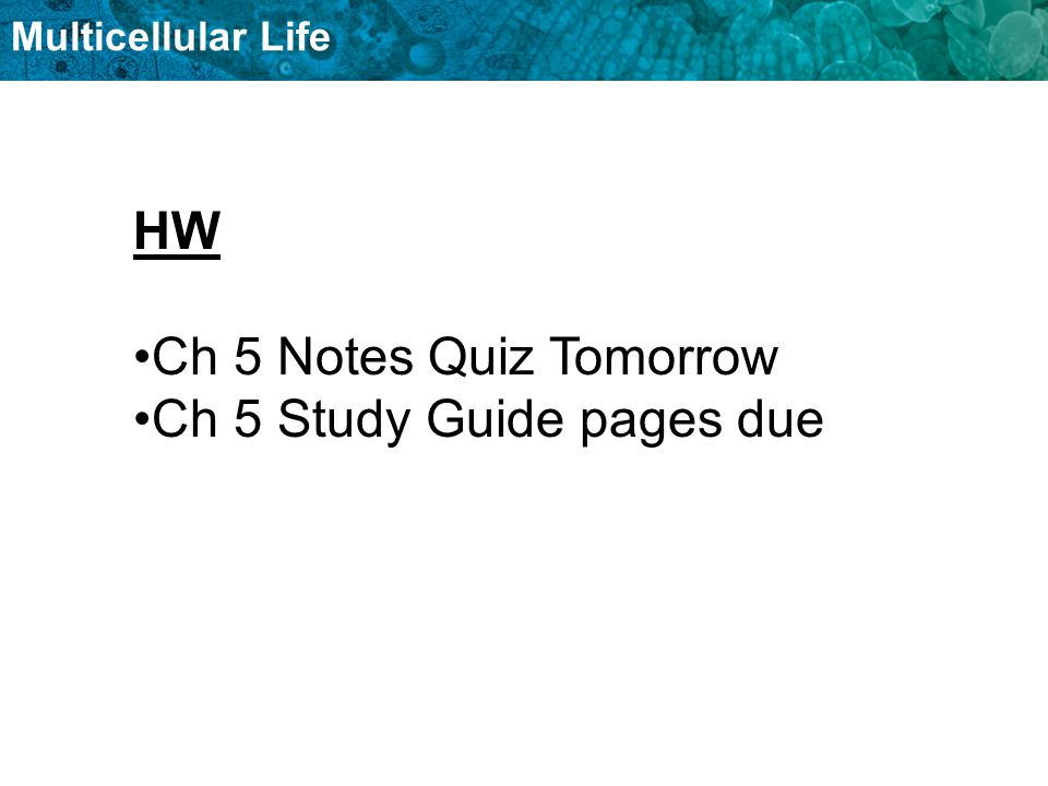 Multicellular Life HW Ch 5 Notes Quiz Tomorrow Ch 5 Study Guide pages due