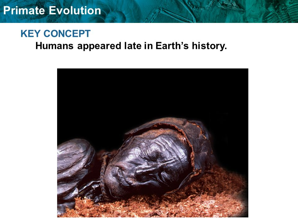 Primate Evolution KEY CONCEPT Humans appeared late in Earths history.