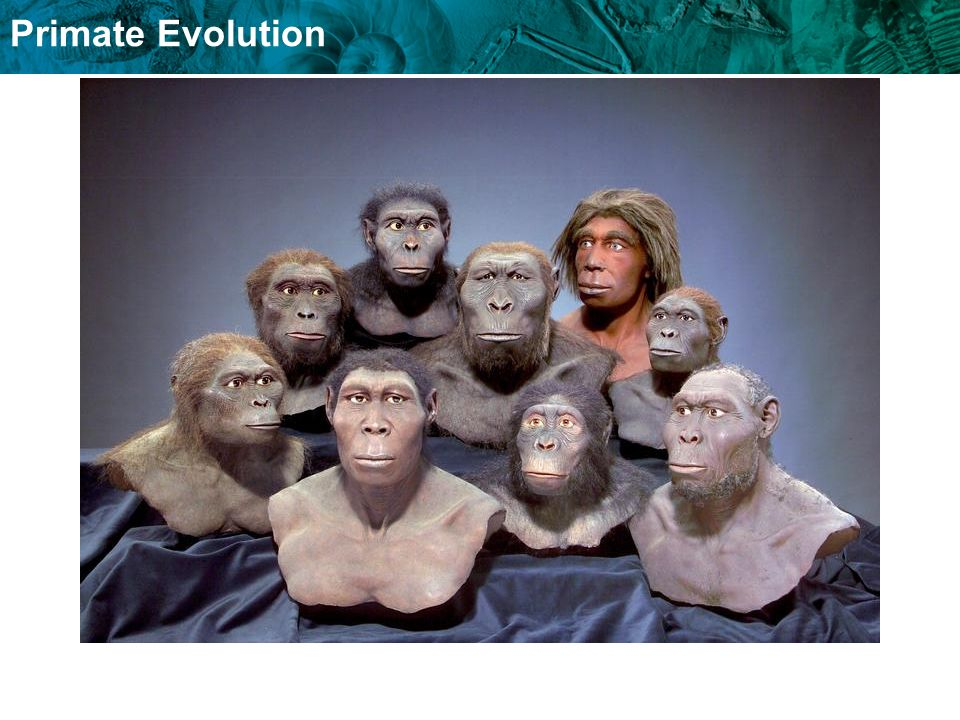 Modern humans arose about 200,000 years ago.Homo sapiens fossils date to 200,000 years ago.