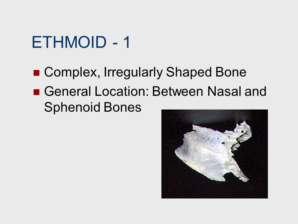 ETHMOID 1 Complex, Irregularly Shaped Bone General Location: Between Nasal and Sphenoid Bones