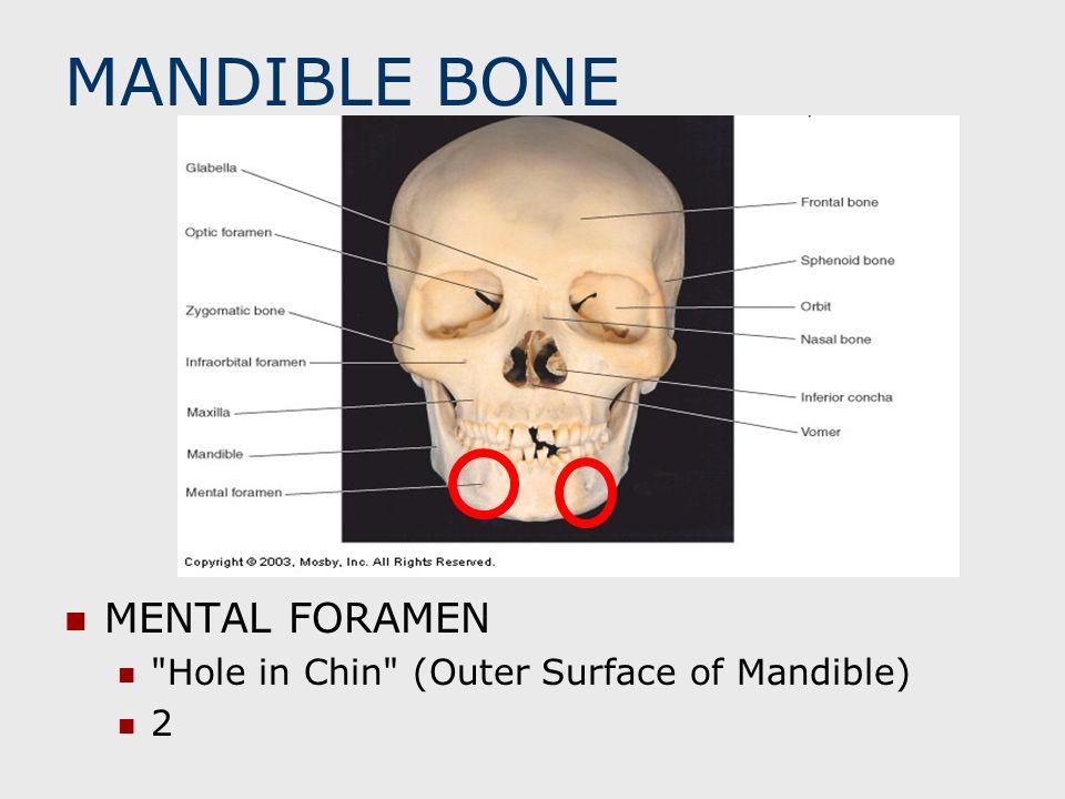 MANDIBLE BONE MENTAL FORAMEN