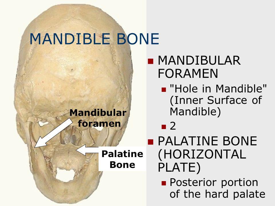 MANDIBLE BONE MANDIBULAR FORAMEN