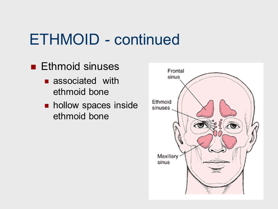 ETHMOID continued Ethmoid sinuses associated with ethmoid bone hollow spaces inside ethmoid bone