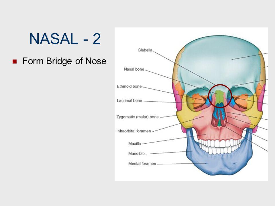 NASAL 2 Form Bridge of Nose